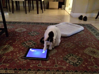 """Cat running a game of """"Cat Fishing"""" on iPad"""