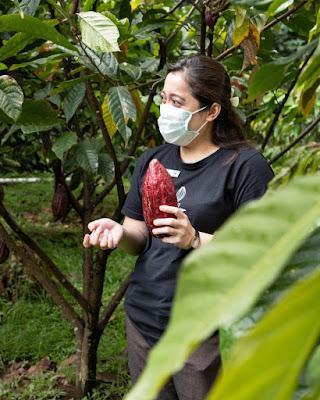 wisata kebun kakao dan keliling pabrik pembuatan cokelat