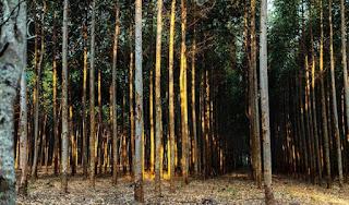TreeCoin lanza una oferta de token para plantar 10 millones de árboles