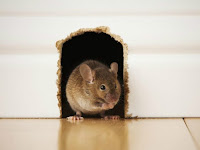Usir Tikus yang Selalu Bikin Kesal Dengan Cara Berikut