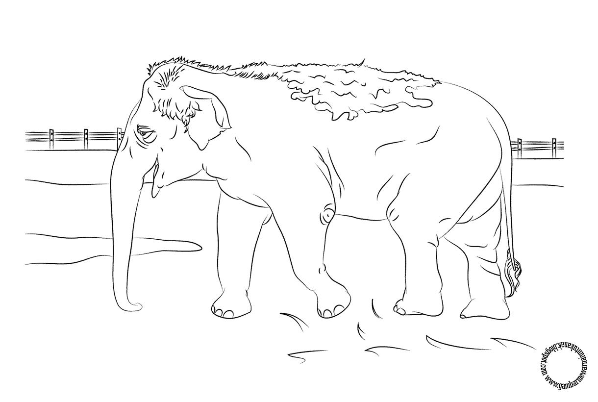 Gambar Mewarnai Gajah India Untuk Anak