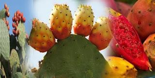 Kaktüs Meyvesi Nerelerde Kullanılır