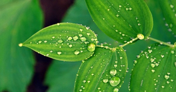 The following are the properties of dew water that is not known to many people