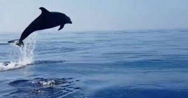 Giacomo Gallo Coaching delfino
