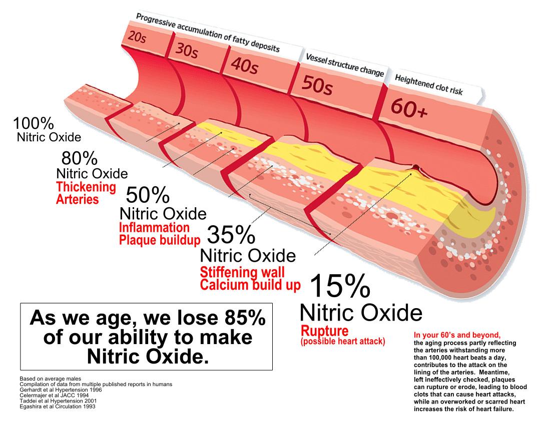How_Arteries_Age