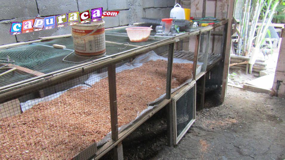 Persiapan Kandang Untuk Ternak Ayam Kampung Super Infoin Aja