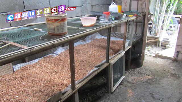 kandang untuk ternak Ayam Kampung Super