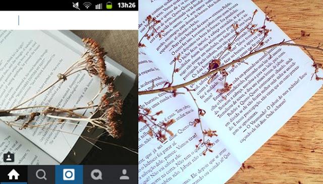 livros e galho tumblr