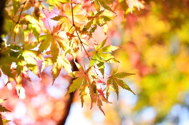 ảnh nhành lá vàng mùa thu