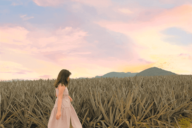 Cánh đồng dứa, Ninh Bình