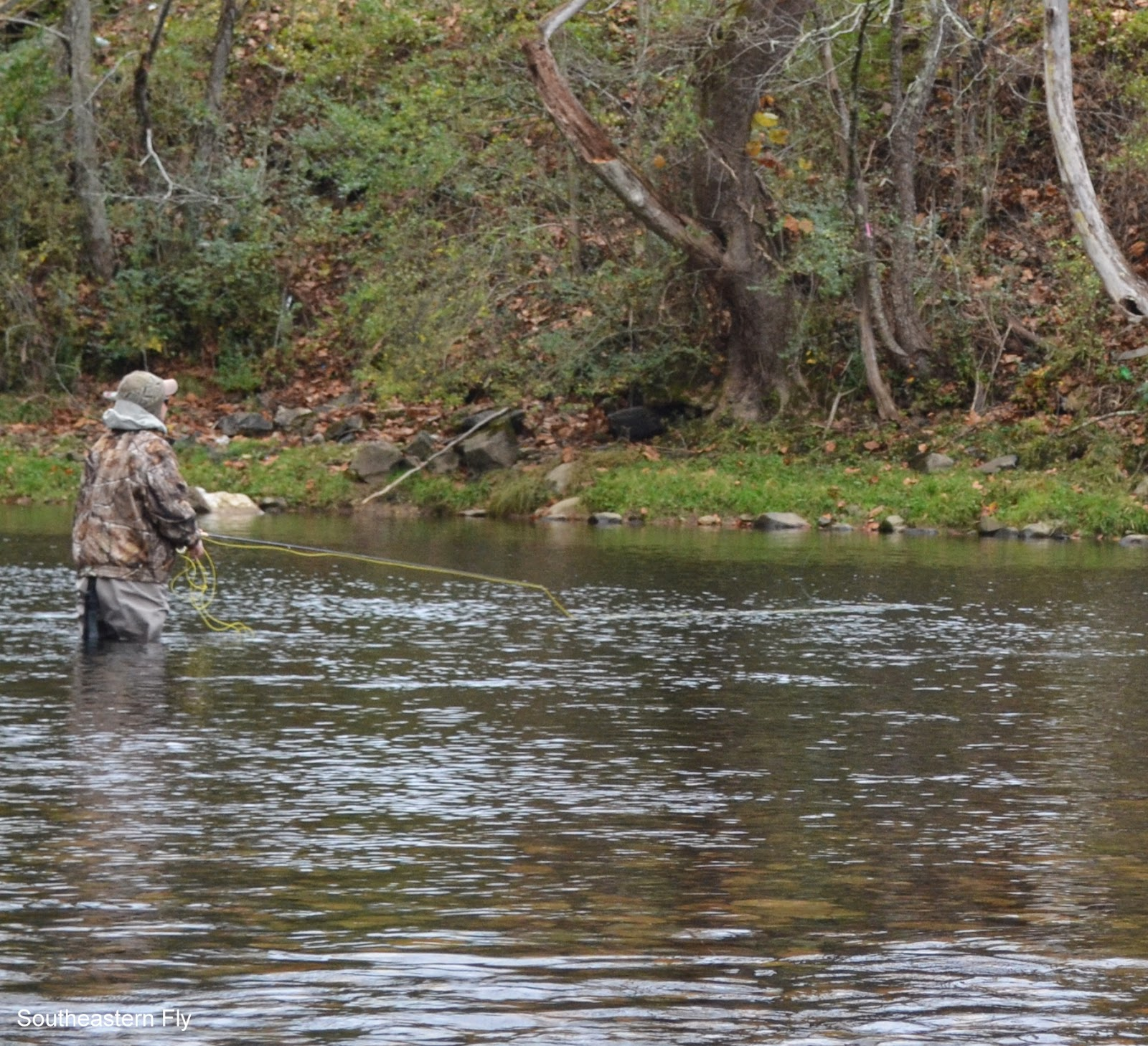 Southeastern fly fly fish the watauga river for Watauga river fishing
