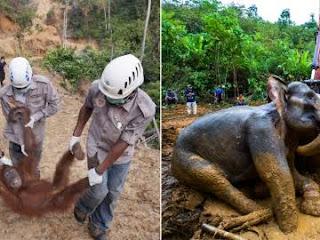 Informe de la ONU dice que la Tierra ha entrado en la 6ª extinción masiva de animales. Hay que detenerla YA