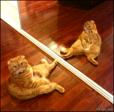 Photoshopped Cat picture • Weird Ginger cat looking at cameraman twice at the same time!