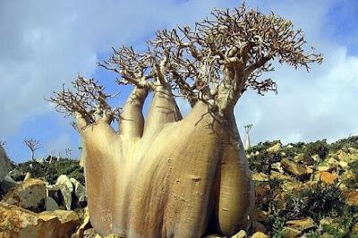 Pulau Dajjal Socotra Tempat Dikurungnya - munsyafandi.com