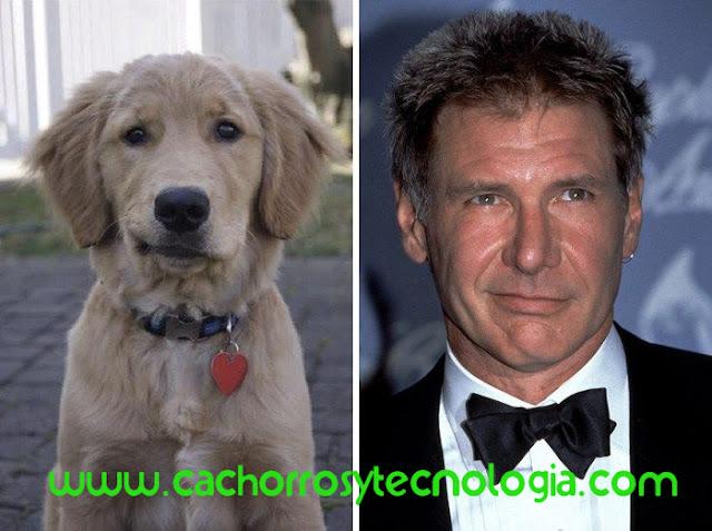 perros se parecen a sus dueños 2020 shurkonrad cachorros tecnologia dog puppy 2