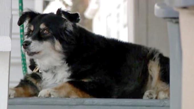 Barbaridade: Empresário morre e deixa herança de R$ 27 milhões para cadela