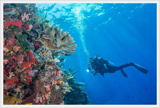 dive spots in bunaken