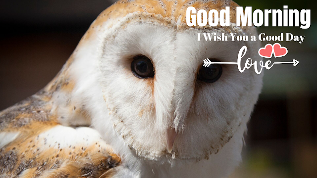 Good Morning image With Cute Animal owl