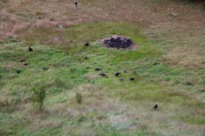 "those large, dark ""dots"" (except the largest) are turkeys"
