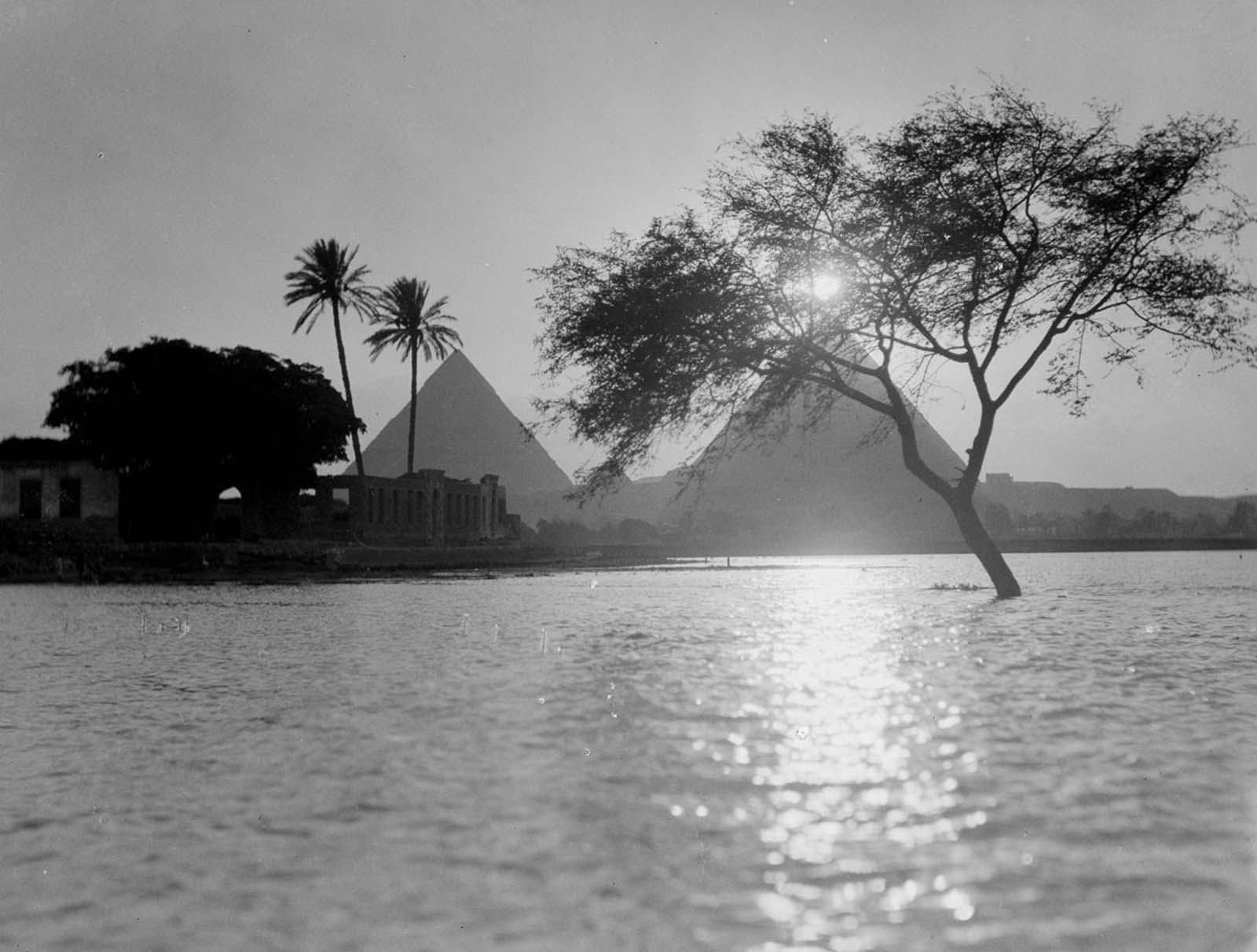 A tree stands partially submerged near the pyramids as the Nile overflows its banks. 1900.