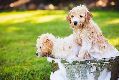 Spa miễn phí cho thú cưng tại Quận 9