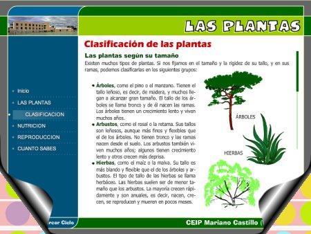 Las plantas caracter sticas y clasificaci n el carretillu for Definicion de cuarto