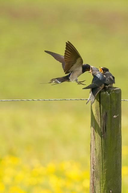 Baby Bird And Mom Bird