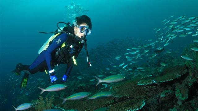 Diving Indonesia A Thrilling Experience for Individuals