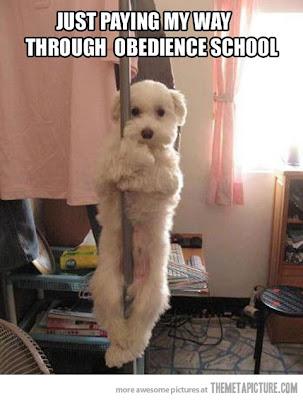 Una perra bailando en el tubo