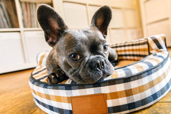 Po czym poznać, że pies ma pasożyty?