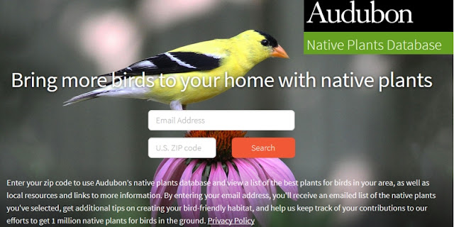 https://www.audubon.org/native-plants