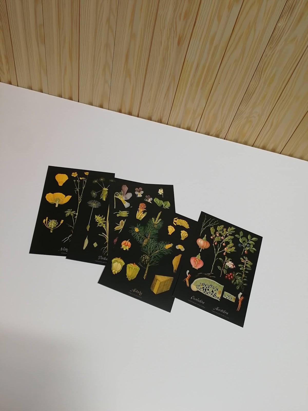 kortit valkoinen tausta