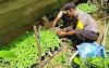 Dukung Program Ketahanan Pangan, Bhabinkamtibmas Polsek Indra Makmu Bina Warga Menanam Nilam