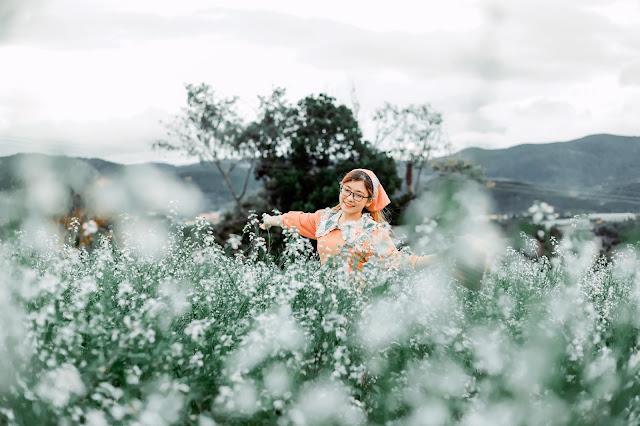 Hoa cải trắng Đà Lạt