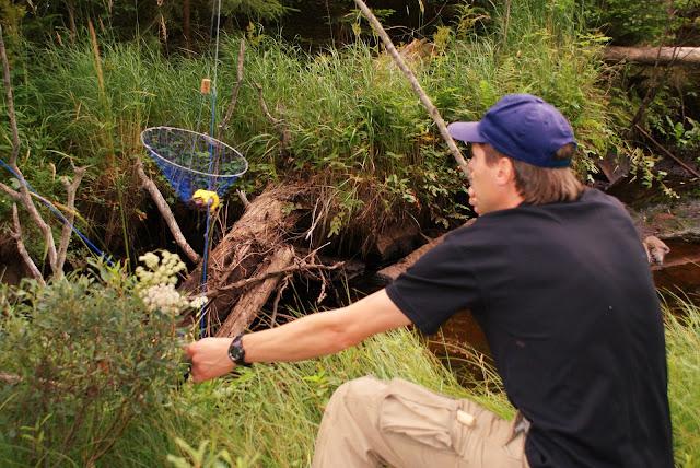 En lång gren med en klyka i ena änden är ett bra hjälpmedel när man lyfter håven. Läs mer!
