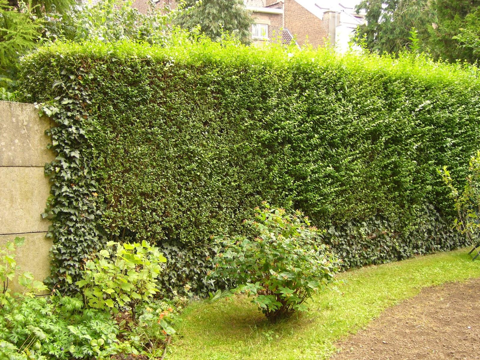 Jardin potager comestible partager for Jardin 4 moineaux