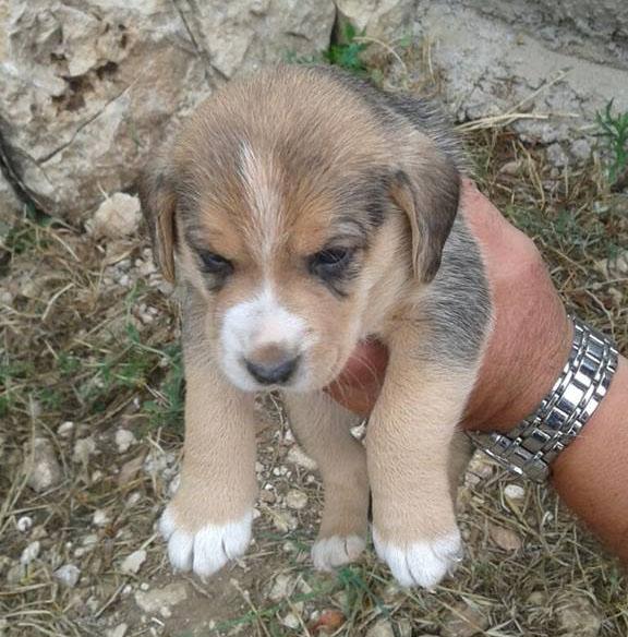 Cuccioli piccola taglia in regalo adotta un cane a for Nomi per cagnolini di piccola taglia