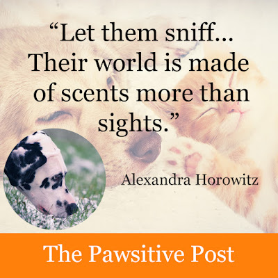 """Quote """"Let them sniff"""" from Alexandra Horowitz and a photo of a Dalmatian sniffing the grass"""