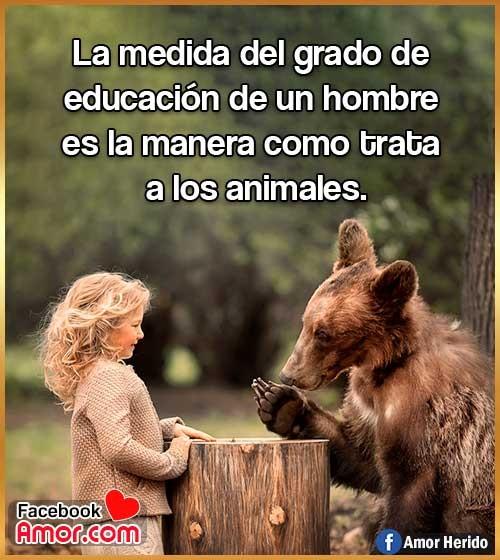 frases de cuidar educar animales