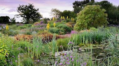 Yeo Valley, la jardinería orgánica se instala en Chelsea