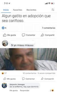 HOMBRE HACIENDOSE PASAR POR GATO HUMOR DE FACEBOOK