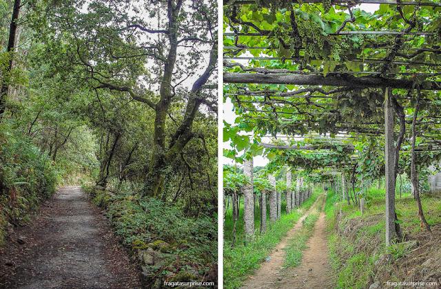 Vinhedos e bosques nos arredores de Caldas de Reis, no Caminho de Santiago