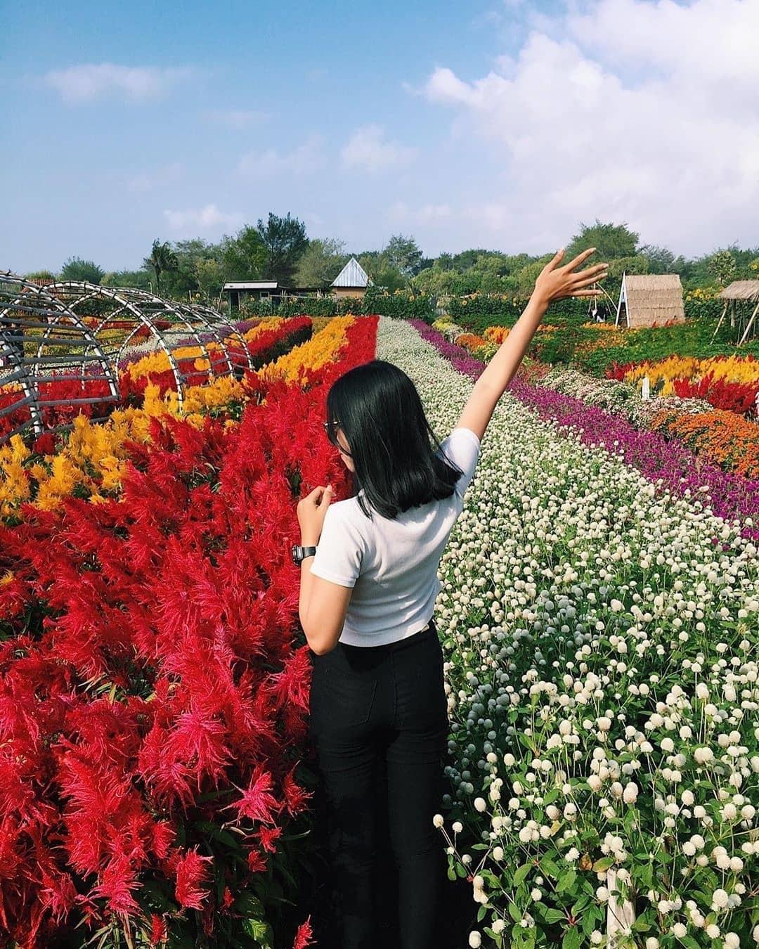 Harga Tiket Masuk Taman Bunga Romatic Garden Bantul