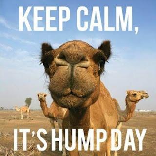 good morning hump day memes, hump day memes camel