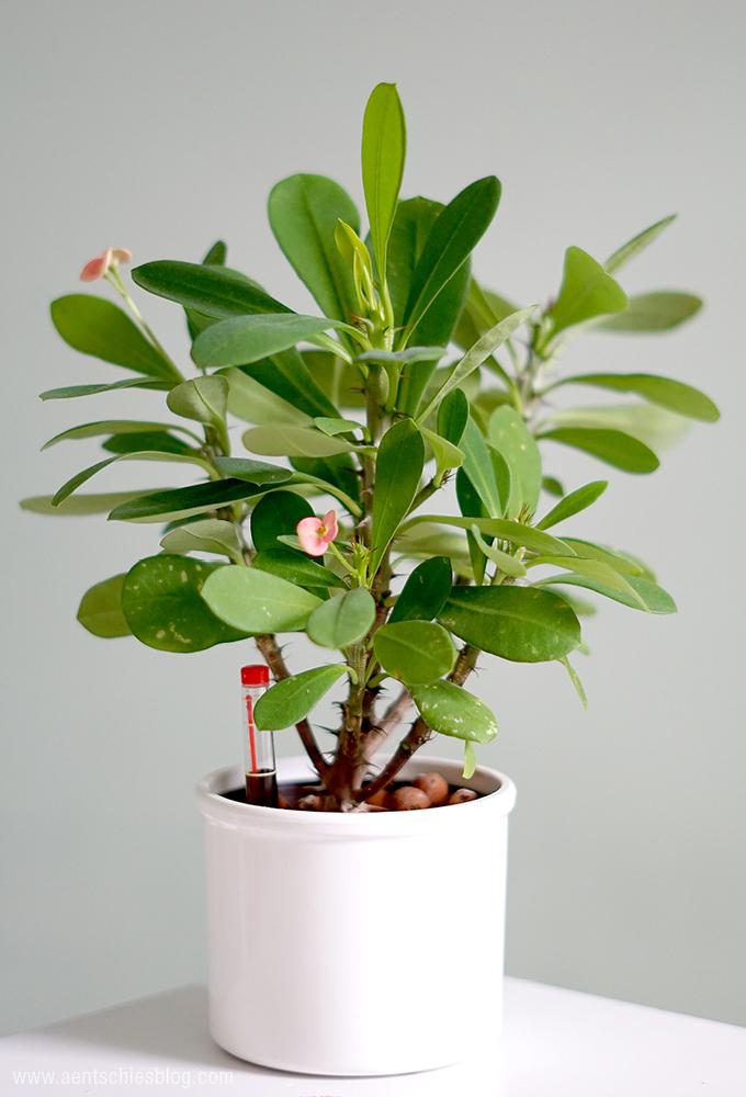 aentschies blog die hydrokultur pflanzenpflege leicht gemacht. Black Bedroom Furniture Sets. Home Design Ideas