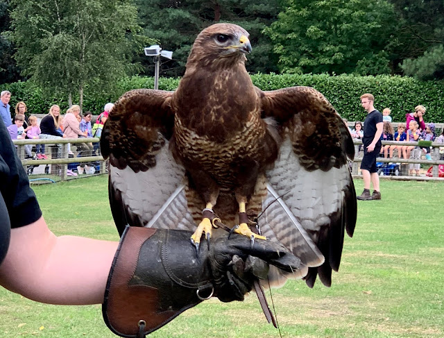 An eagle with it's wings out at Barleylands bird of prey display