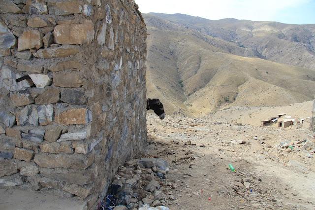 Ouzbékistan, Hazrat-Davoud, épervier?, oiseau, © L. Gigout, 2012