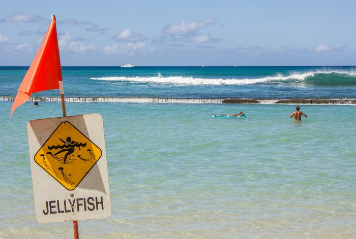 Jelly fish sting what to do danger at the beach
