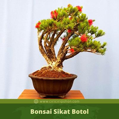 Bonsai Sikat Botol