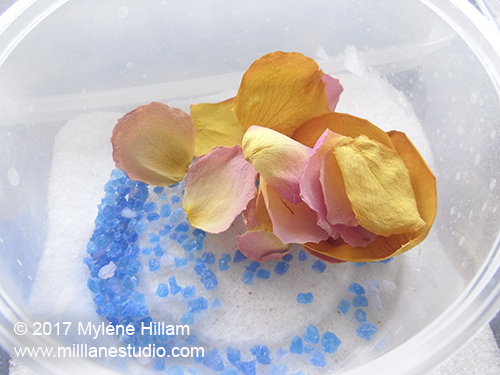 Dried rose petals sitting on a bed of blue silical gel in an airtight containers with some dessicant in the bottom to keep them dry.